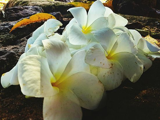 Nature Flowers_collection Whiteandyellow Beutifulcolors Jehovahtheartist