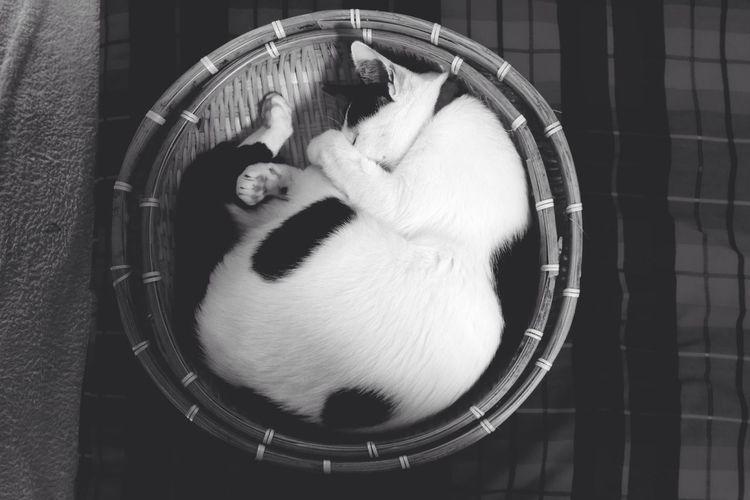 Cat Nekozaru Sleppingcat 猫ざる Sleeping