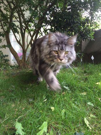 Animal Themes Cat Domestic Cat Feline No People