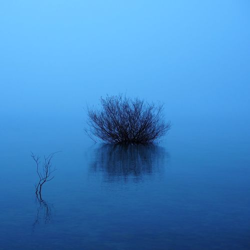 Shades of blue on a foggy morning Bare Tree Beauty In Nature Blue Branch Day Fog Horizon Horizon Over Water Lake Nature No People Outdoors Plant Reflection Reflection Single Tree Sky Tree Water Water Reflections