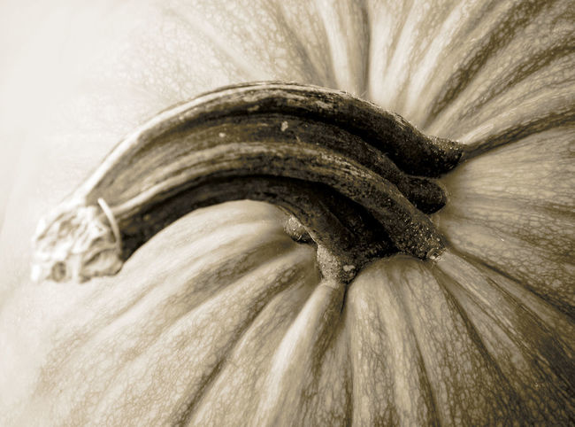 PECULIAR PUMPKIN Blackandwhite Photography Close-up Food Growth Nature Organic Pumpkin Stalk