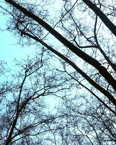 Outdoors Low Angle View Branch Silhouette Tree Bare Tree Sky Scenics Tranquility Nature Beauty In Nature Growth Blue Tranquil Scene Day WoodLand Outline Non-urban Scene Treetop Solitude