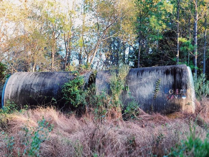 Abandoned cylinders Light And Shadow Grass Cylinder Interesting Outside Photography Outside Abandoned Places No People Day Nature Plant Outdoors Mammal Tree Land Wall - Building Feature Growth Domestic Built Structure Dirt Obsolete Pets Animal Domestic Animals Old Field Animal Themes