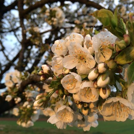 Blüten in der Abendsonne. Ungefiltert.