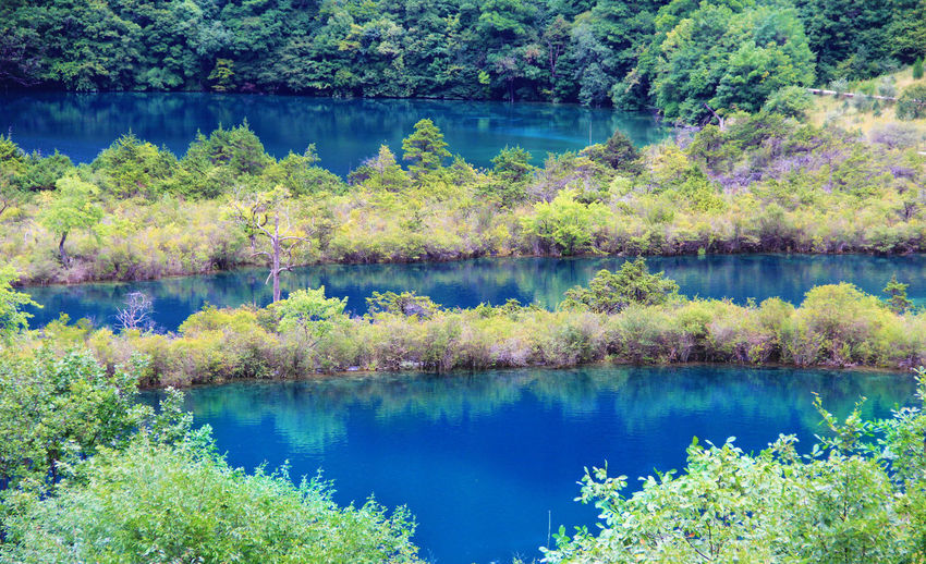 Forest Blue Turquoise Colored Non-urban Scene Outdoors Green Color Standing Water No People Nature Tree Scenics - Nature Tranquil Scene Tranquility Beauty In Nature Plant Water Reflection Lake Jiuzhaigou