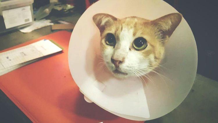 แมวฮิพ Hipster Cat♡