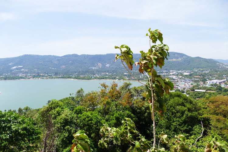 Plant Growth Beauty In Nature Nature Tranquility Mountain Scenics - Nature Sky Water Tree Day No People Outdoors Flowering Plant Landscape Non-urban Scene Tranquil Scene Green Color Seaview Coastline High Angle View View From Above Overlooking Shoreline Koh Samui,Thailand Flower