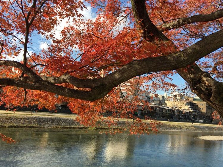 Kyoto Autumn Leafs Kyoto City Kyoto Autumn Kyoto Japan