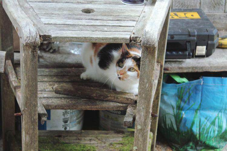 Portrait of cat by wood