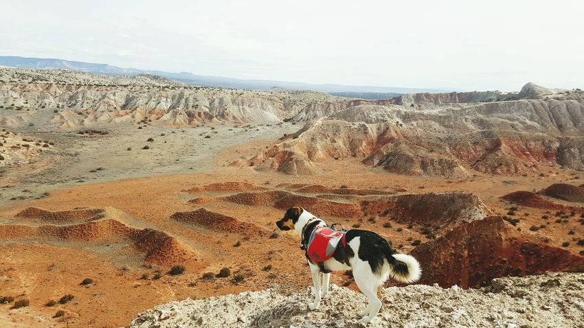 Doggy Hiking💙 Desert Landscape Doggy Backpack White Mesa Spine Trail Hiking❤ Beauty In Nature
