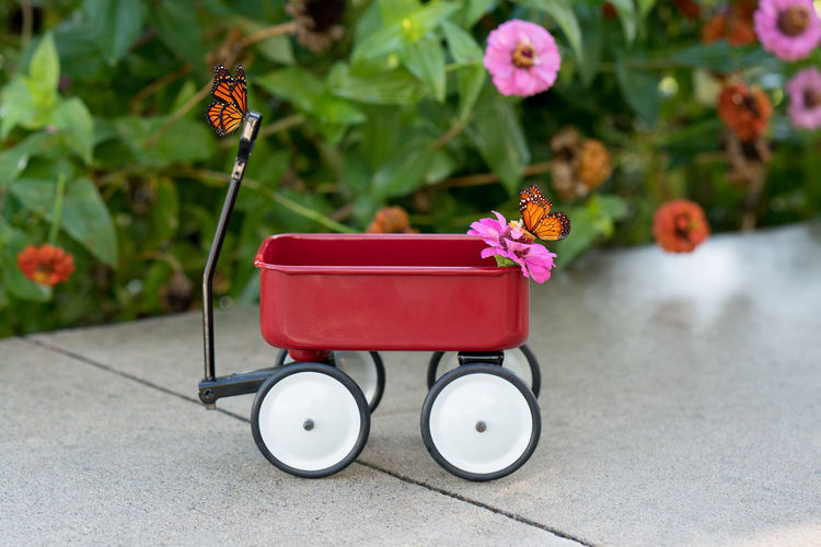 Open Edit Red Butterflies Flowers Little Red Wagon No People Outdoors Red Wagon Still Life