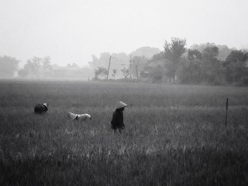 Morning fog at paddy field Blackandwhite Nature_collection Hitam Putih Bw_collection