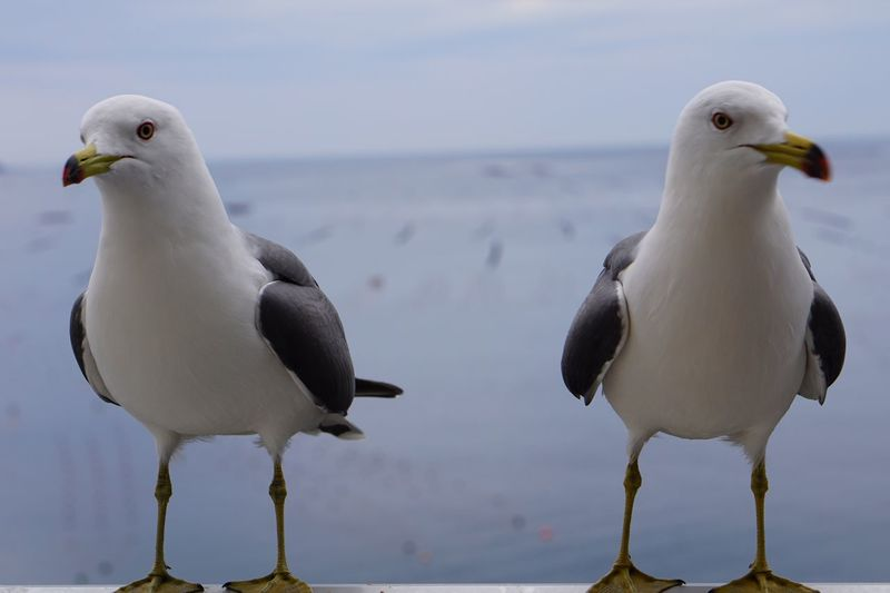 Symmetry Animal Themes Bird Animals In The Wild Sea Seagull Nature Togetherness Beach