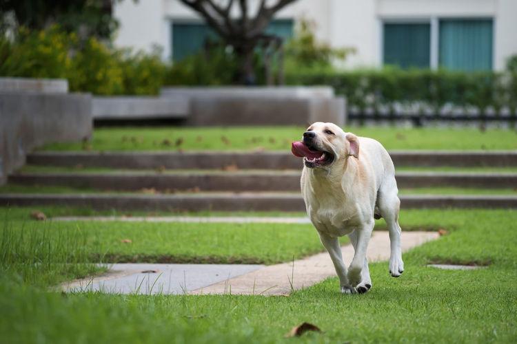 Dog on grass in yard