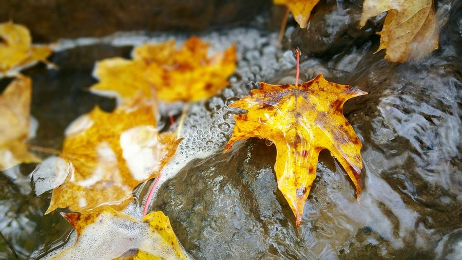 Close-up of yellow leaf in water
