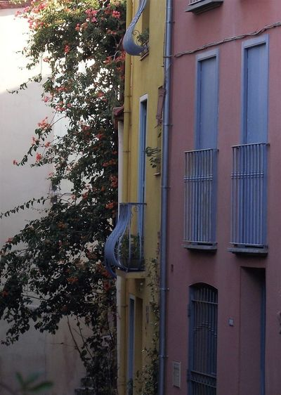The Week On EyeEm Architecture Branch Building Exterior Built Structure Couleurs Du Sud Day Vieux Village France Window