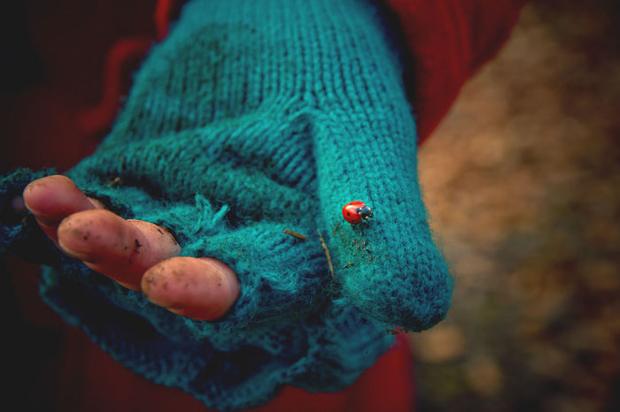 Animal Representation Animal Themes Blue Child Childhood Dirty Fingers Fingers Focus On Foreground Glove Hand Hopeful Ladybird Luck Multi Colored One Animal Photography In Motion Poor Kids Wildlife Inner Power