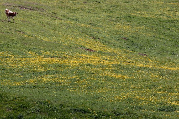 Lawn at