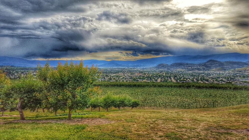 Cloud Formations Lake View Rich Colors EyeEm Nature Lover Apple Tree Vineyard Orchard Clouds And Sky Enjoying Life Natural Beauty EyeEm Gallery Relaxing First Eyeem Photo Majestic Nature Eyeem Best Shots - Canada Green Landscapes EyeEm Best Shots - Nature True Beauty Enjoying Life Nature Kelowna,BC Landscape Cityscapes City View