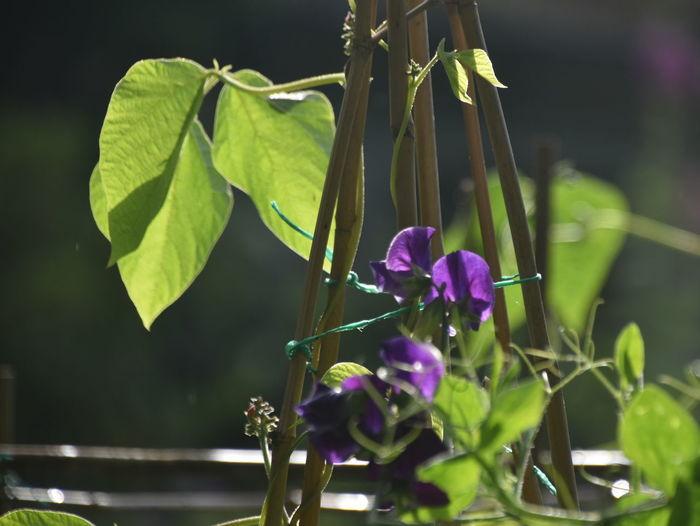 England Plant