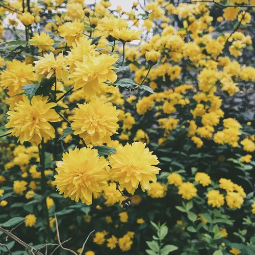 Yellow Flower Fragility Nature Beauty In Nature Freshness Growth Petal No People Flower Head Close-up Blooming Outdoors Day