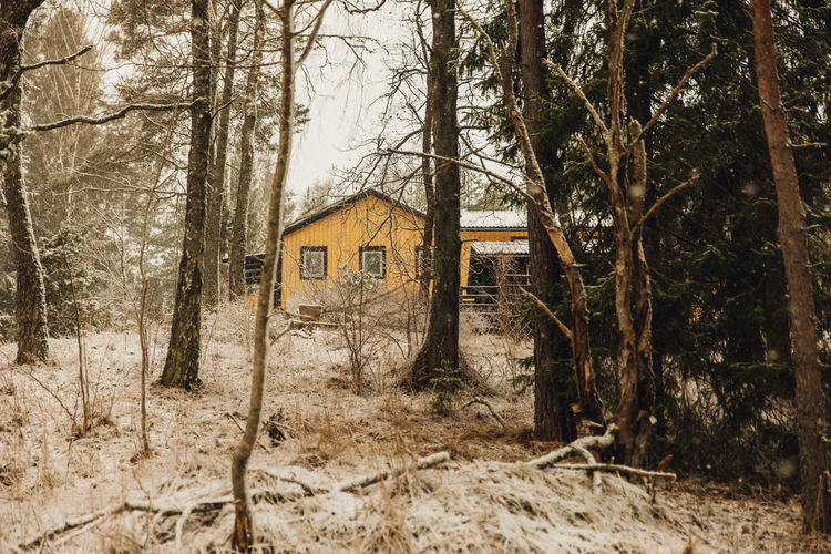 Trees and abandoned house in forest