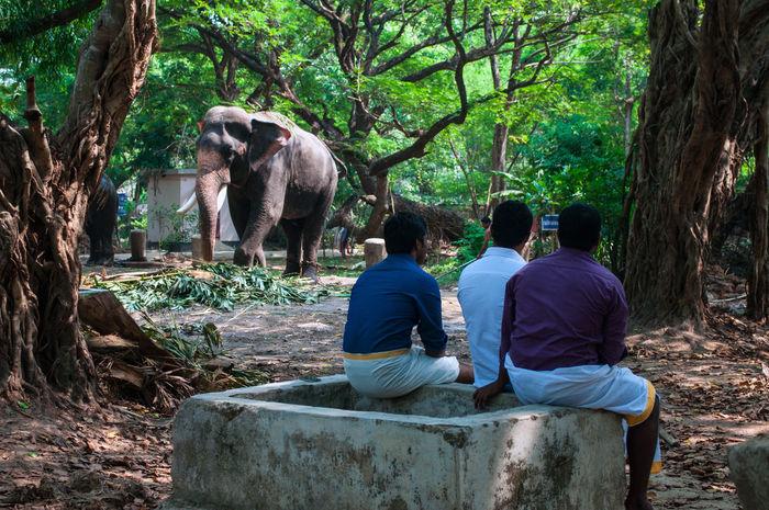 Animal Themes Elefante  Elephant India Indian People Indians  Kerala Men Natura Nature One Animal People Persone Persons Real People Uomini The Photojournalist - 2016 EyeEm Awards