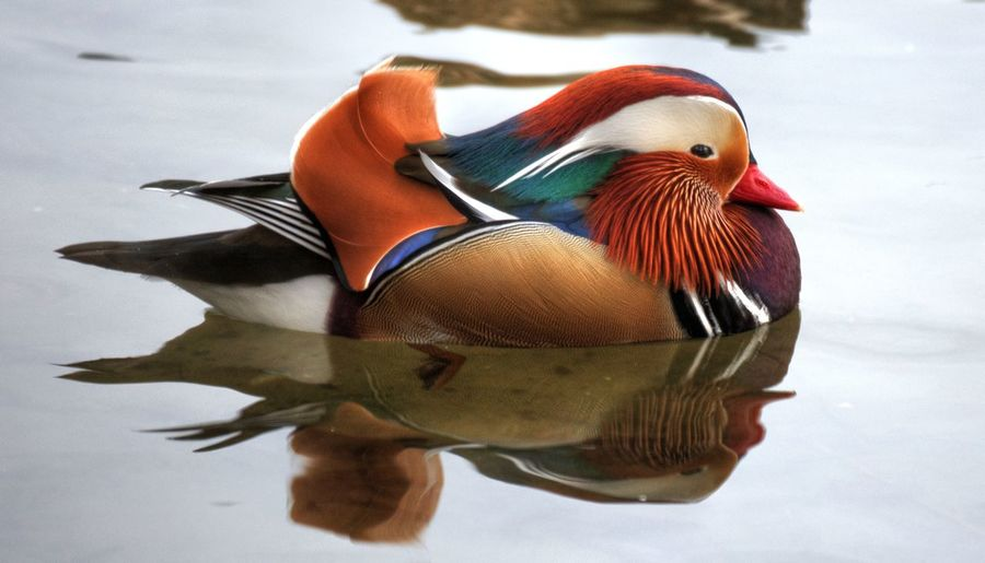 Close-up of bird swimming in lake