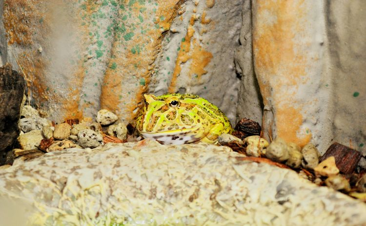 frog Textured