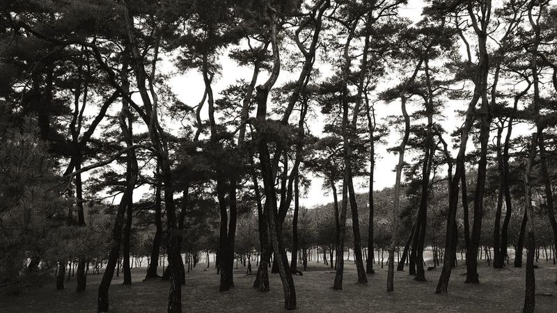 Tree Branch Sky Picket Fence Bare Tree Tree Trunk Growing Woods Treelined