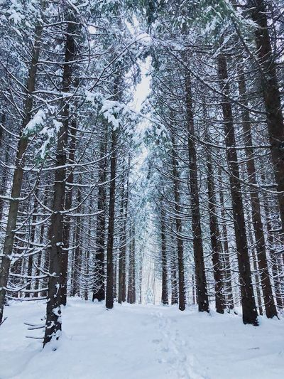 Snow Winter Cold Temperature Tree Plant Land Landscape
