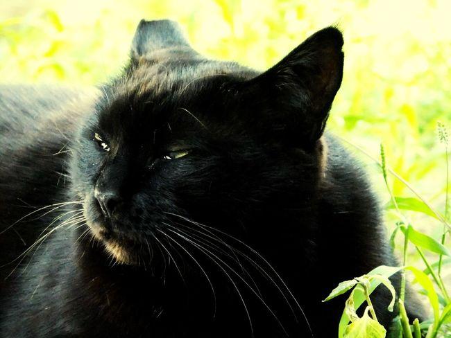 Relaxing Enjoying Life Lifestyle BLackCat Cute Cats Cats Of EyeEm Pets Animals Gatto Catsofinstagram