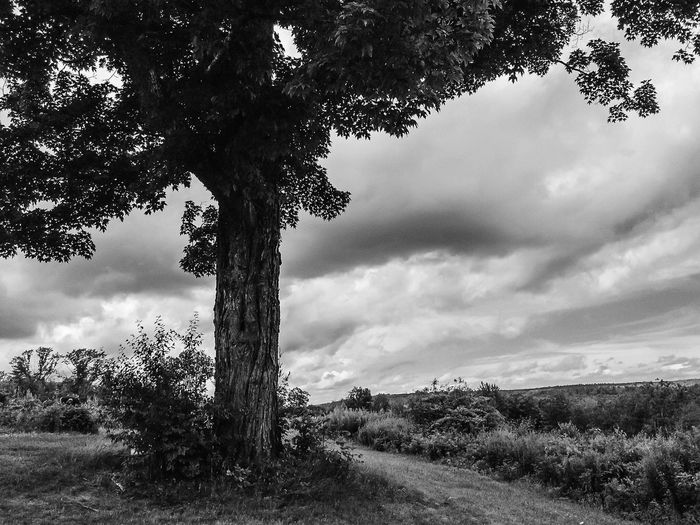 Corner tree