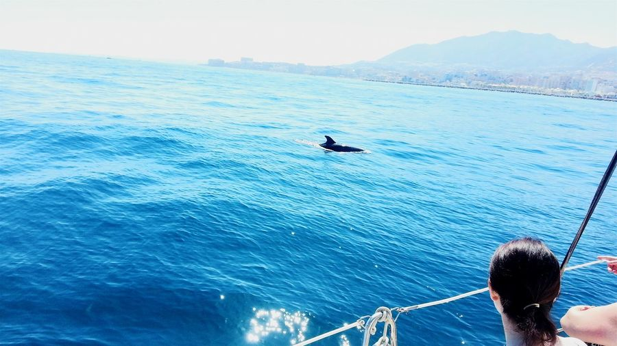 Dolphins watching. Torremolinos, Spain