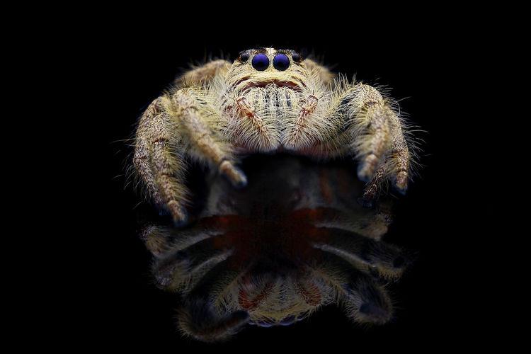 Close-up of spider on black background