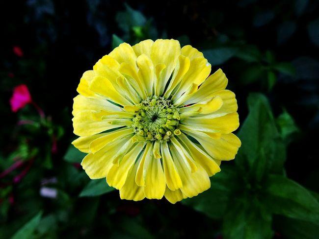 Flower Nature Beauty Yellow Open Edit Hello World EyeEm Taking Photos