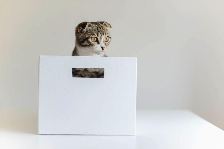 Portrait of cat sitting on paper