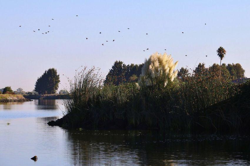 Delta In San Joaquin Nature Birds Stockton
