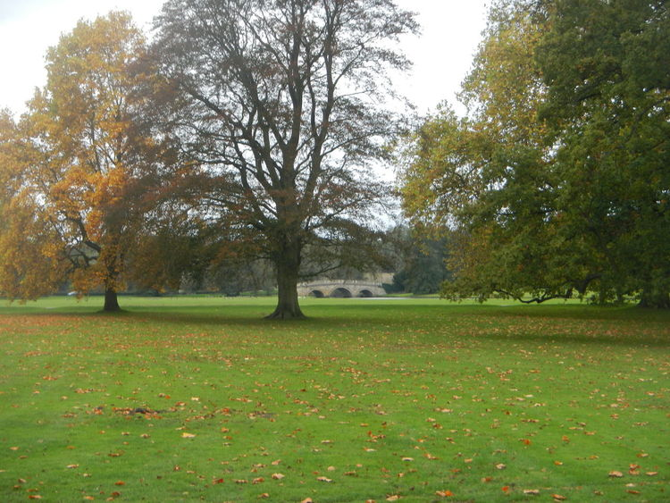 Audley End Beauty In Nature Day Field Grass Grassy Green Color Growth Idyllic Landscape Lush Foliage Nature No People Non-urban Scene Outdoors Park Scenics Sky Tranquil Scene Tranquility Tree