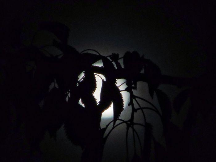 obscured Eye4photography Moon EyeEm Best Shots TreePorn