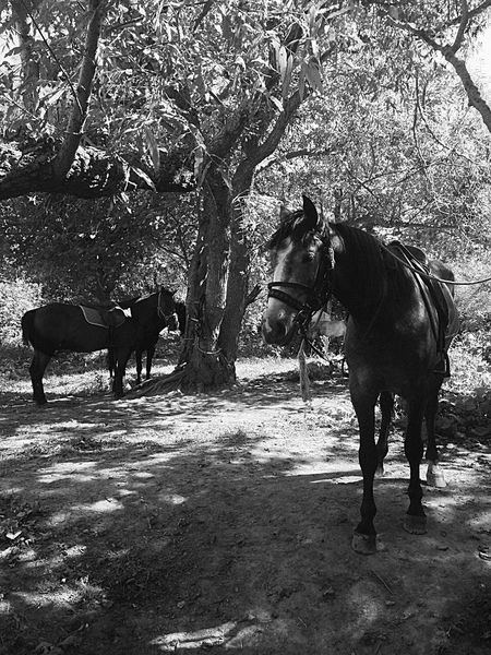 Horse Sakhalin Nature_collection Animals Relaxing B&w