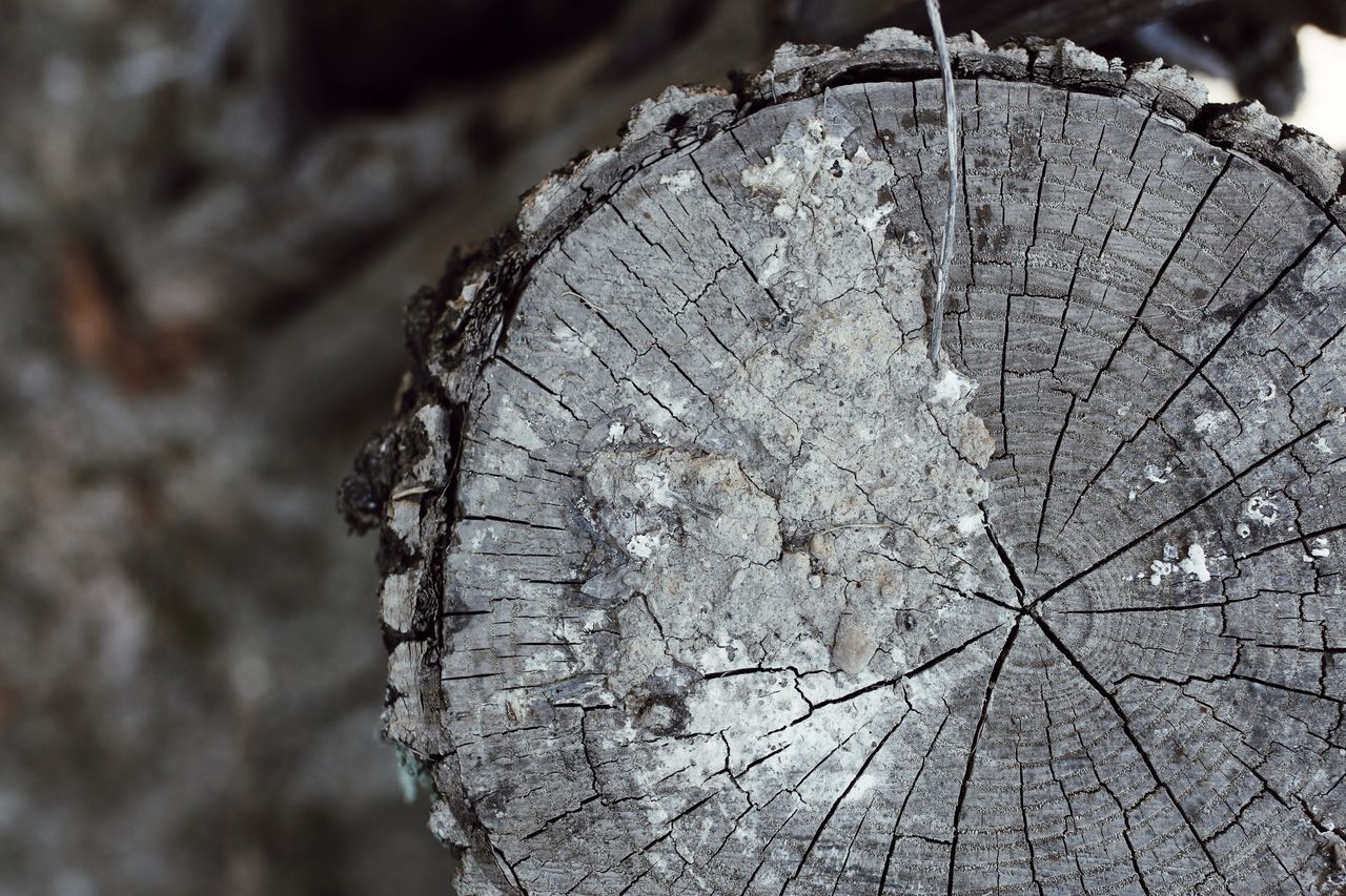 tree, textured, close-up, wood - material, focus on foreground, bark, nature, deforestation, tree stump, log, wood, no people, timber, day, pattern, tree trunk, forest, rough, shape, trunk, outdoors, tree ring