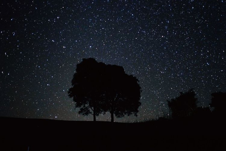 Night Star - Space Astronomy Space Sky Star Star Field Plant Galaxy Tree Nature Beauty In Nature Silhouette Scenics - Nature Land Low Angle View Tranquility Tranquil Scene No People Infinity