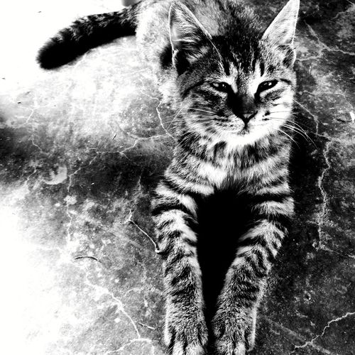 Pet Portraits Cat Cute On Saturday Comfortable