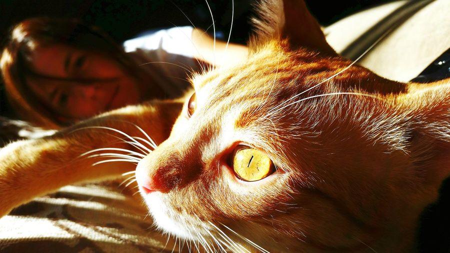 Milho modelo. Pet Cat Eyes Cat Lovers Cat♡ Catsagram Cats Cats Of EyeEm
