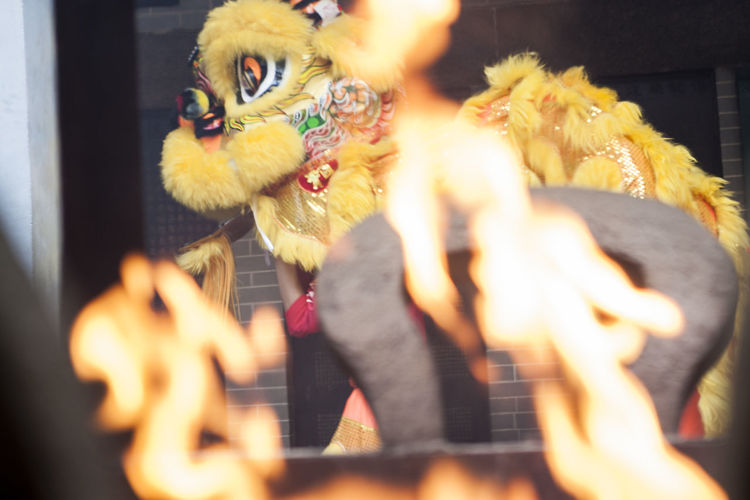 Animal Themes Close-up Day Indoors  Lion Dance No People