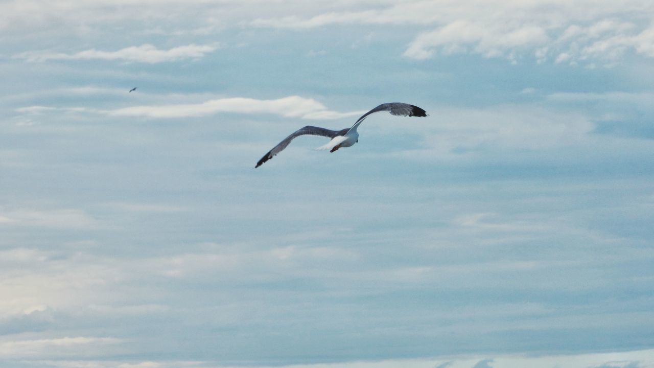 animal wildlife, animal themes, animal, animals in the wild, vertebrate, flying, bird, cloud - sky, sky, one animal, spread wings, mid-air, no people, nature, low angle view, motion, beauty in nature, day, outdoors, seagull