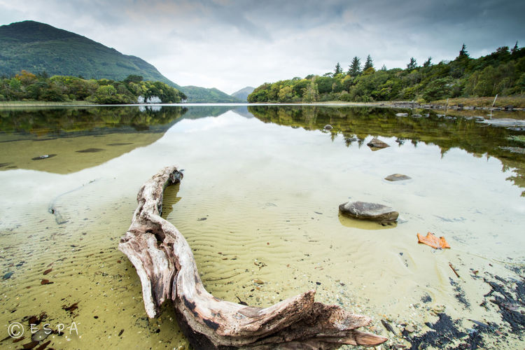 Driftwood in river against cloudy sky