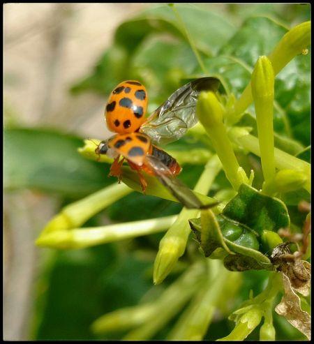 Yardlife Nature Macro Insect Catarinas