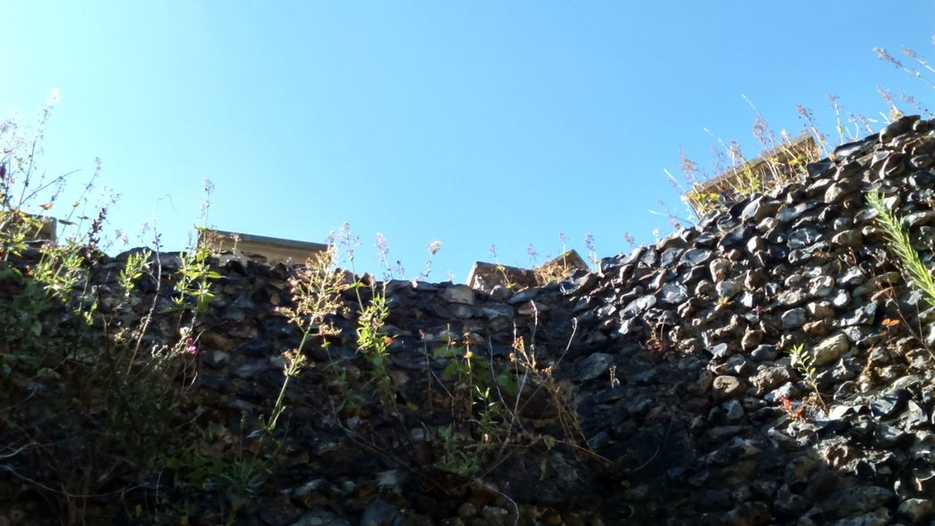 Look Up To The Sky Blue Sky Landscape Stones Castle Walls Castle Tower Structure Castle Ruin Old Structure Old Building  Old Wall Castle Hertford Stone Wall Wall Heritage English Heritage Wild Wildflowers Wild Flowers Growing Growing In Strange Places Growing Wild Growing With Nature Nature